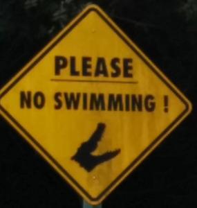 panneau attention alligators, ne pas nager