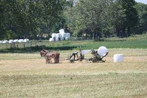 le travail au champ des Amish